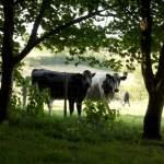 Farm Life in Photo's