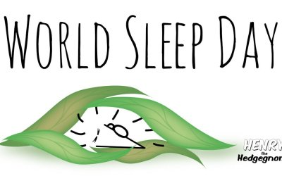 It's World Sleep Day, so Henry the Hedgegnome is having a nap.