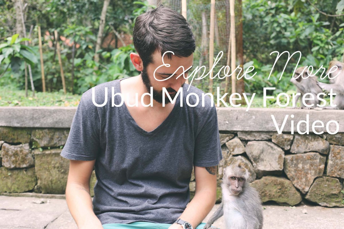 The Monkey Forest // Ubud