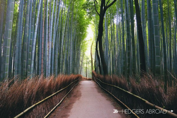 Bamboo Forest // KYOTO