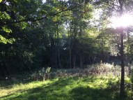 Birtley_Woodlands