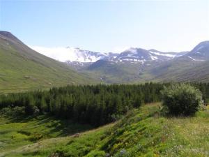 Skógræktin á Siglufirði