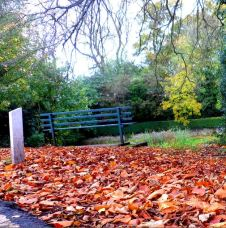 Bench overlooking Horsewell Pond