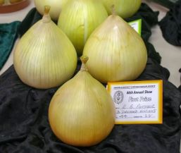 R B Potter – 3 dressed onions - Photo: Linda Hinchcliffe
