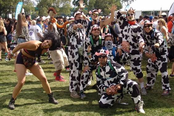 EZOO 2016 Cows
