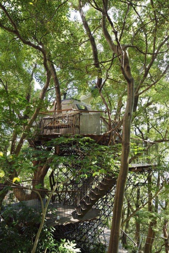 Drevesna hiška Kusukusu ''gnezdi'' v 300 let starem drevesu