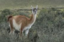 © Katrin Züger,Foto Reise Patagonien