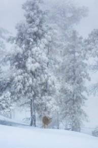 © Maurizio Tonelli, Winter Foto Reise
