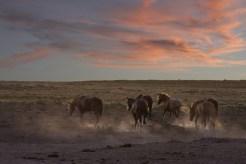 © Yvonne von Allmen, Foto Reise Indianer Canyon 2015