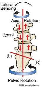 Spine & Pelvis Showing Leg Length Discrepancy Symptoms