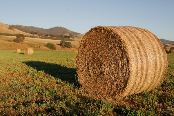 Hay bale in field
