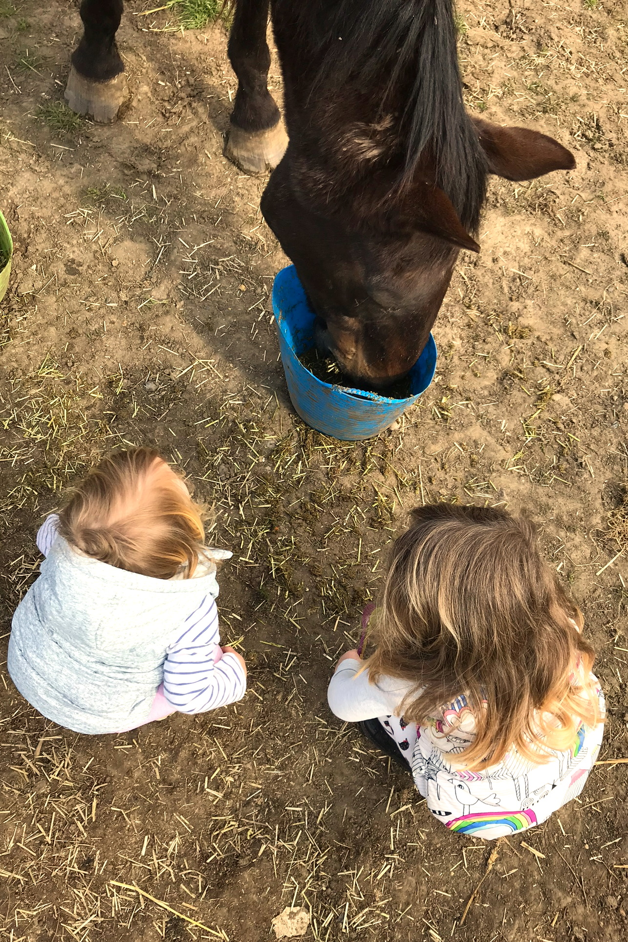 two sisters crouched in front of a horse eating from a bucket