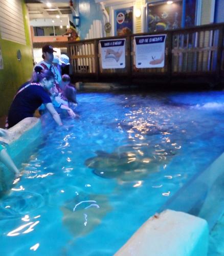 Clearwater Marine Aquarium sting ray petting tank