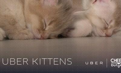 Uber Kittens cheezburger aspca