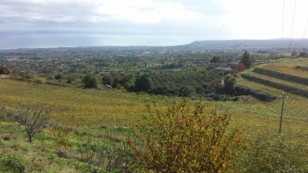 Sicily Wine Tour Barone di Villagrande vineyard