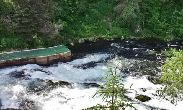 Russian River Falls Salmon Run Cooper Landing Alaska