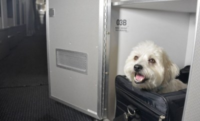 american airlines first class pet cabin flights