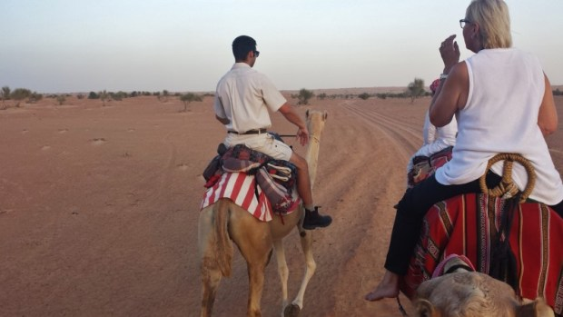 Al maha desert resort camel ride guide