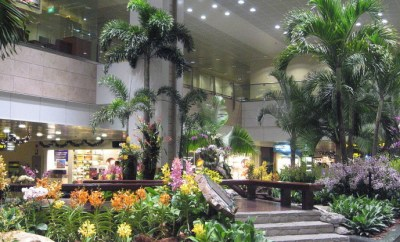 Changi Airport Singapore live plants