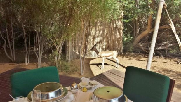 Al Maha Desert Resort Dubai gazelles