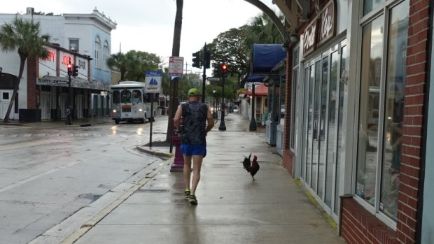 Key West Duval Runner & Rooster