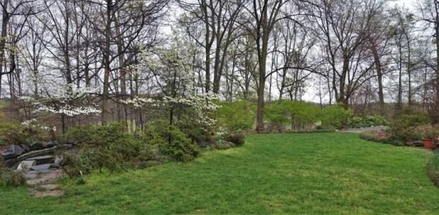 National Arboretum DC Azalea clearing