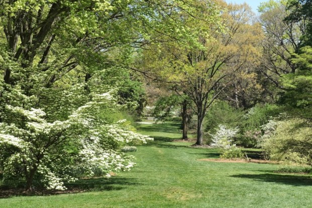 National Arboretum DC Dogwood Trail