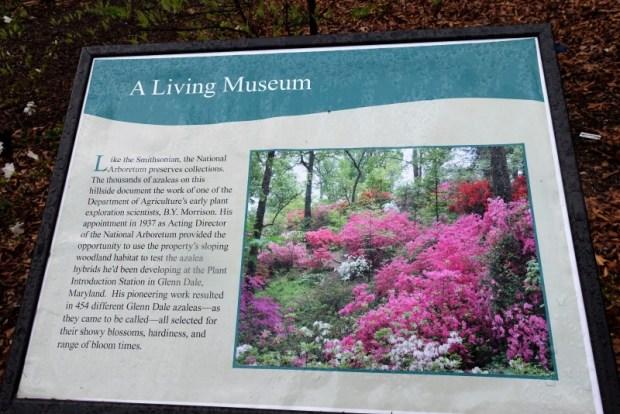 National Arboretum DC azalea sign