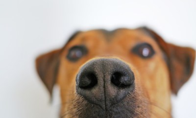 dog-838242_1280