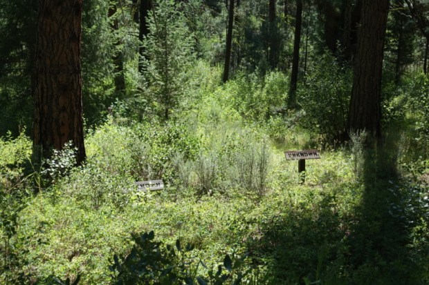 Idaho City Pioneer Cemetery Boot Hill unknown graves