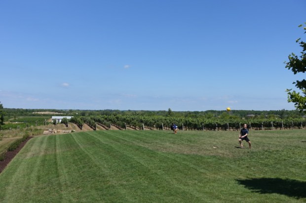 ravine-vineyard-view-wine-tasting-niagara