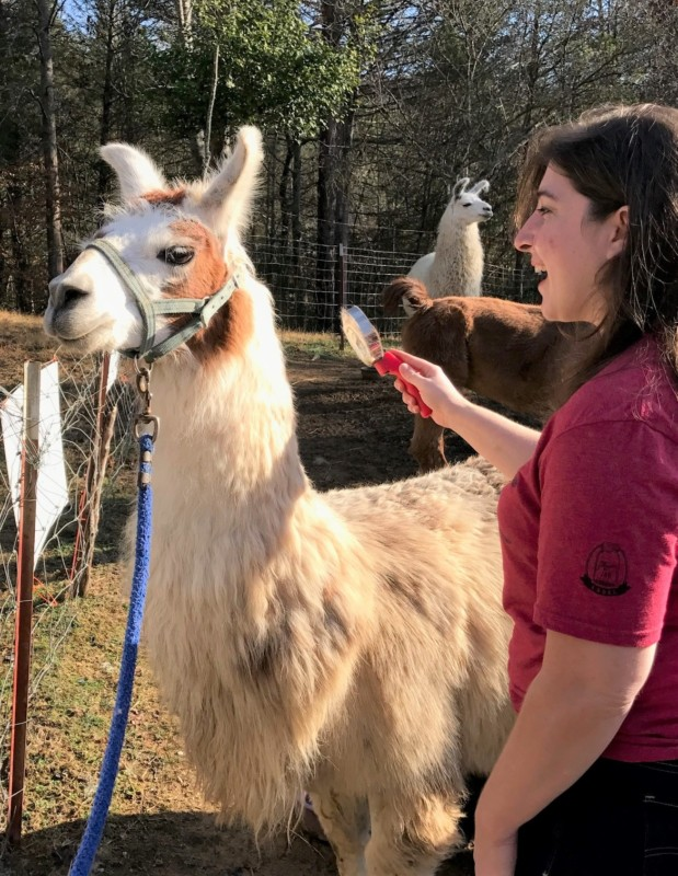 smoky-mountain-llama-treks-keri-brushing