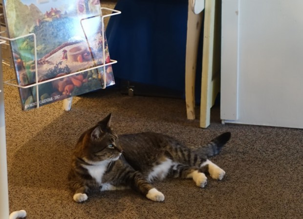 topsail-beach-nc-quartermoon-bookstore-cat