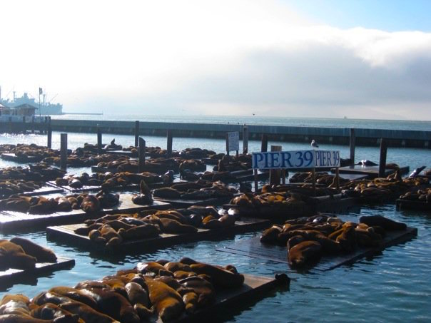 San Francisco - Seals