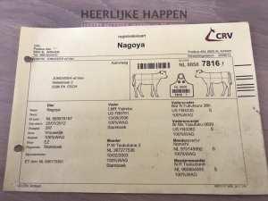 Francine Bij Halsebroek Wagyus
