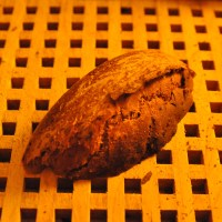 Schnelles Roggenbrot - auch für den Brotbackautomaten