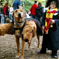 Harry Potter and the Cosplay of Geekery