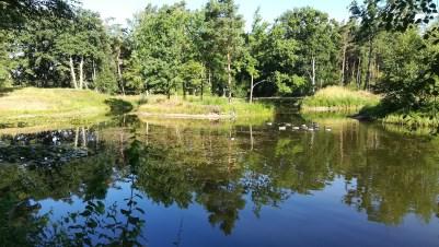 Die Insel im Teich habe ich getroffen...