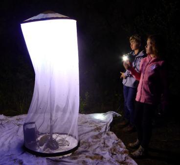 Nachwuchsforscher beim Lichtfang (Foto: Gabi Miebach)