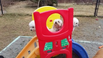 Heide's Pet Care Playground