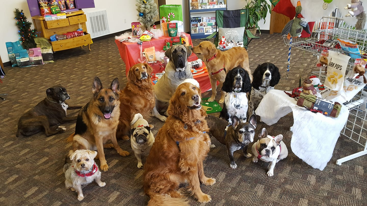 Let's go shopping at Heide & Dave's Pet Care Store!