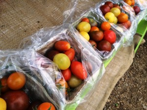 mary tomatoes from Windcrest