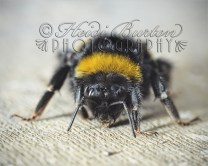 2nd August 2013 - this massive little guy was sat on our patio looking a bit dazed so I took advantage and snapped a few shots