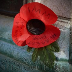 12th November 2013 - Another image of Remembrance.