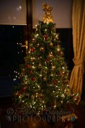 28th December 2013 - the tree at my in-laws, so pretty ]Copyright Heidi Burton ABIPP. No use without the prior consent of the photographer.