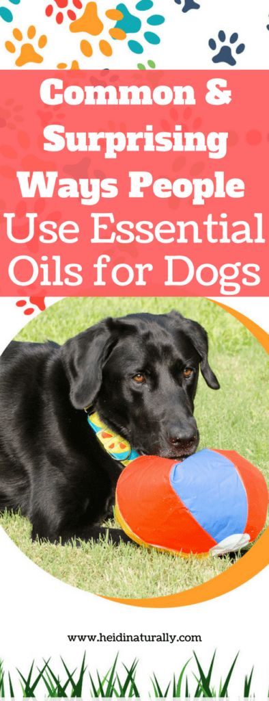 oils to use on dogs