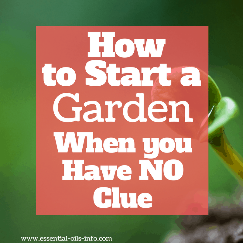 How to Start a Garden When You Have NO Clue