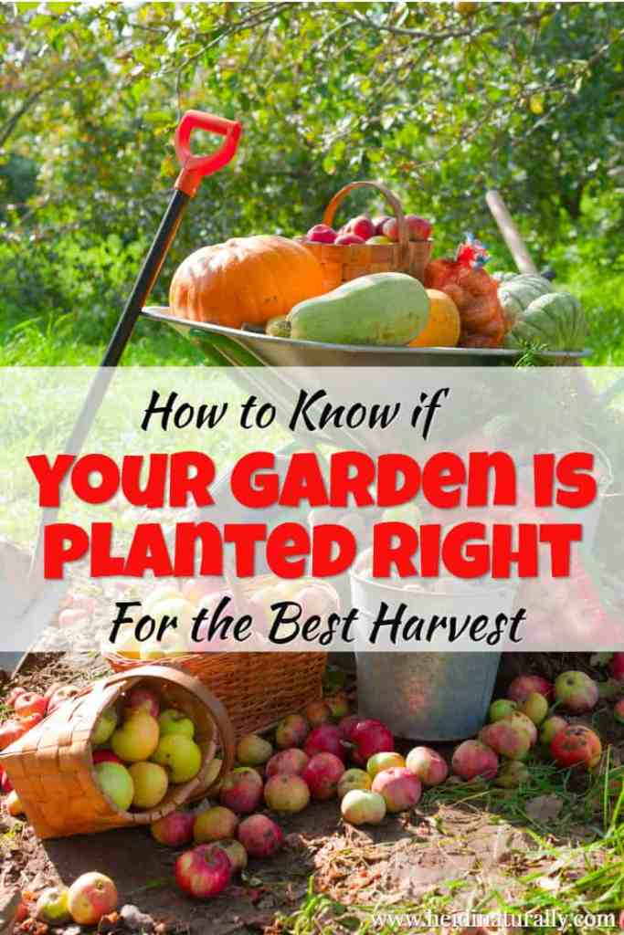 how to know if your garden is planted right