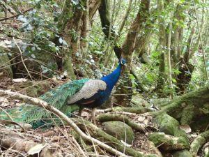 Wildlife_Secret_Falls_Kauai_Hawaii