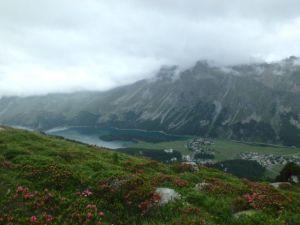Wildflowers_in_the_Alps_by_Heidi_Siefkas
